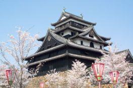 【桜・見頃】松江城山公園