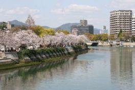 【桜・見頃】平和記念公園