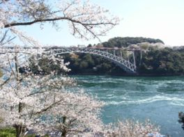 【桜・見頃】西海橋公園
