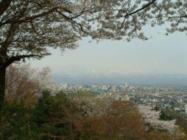 【桜・見頃】呉羽山公園