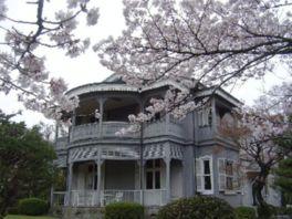 【桜・見頃】博物館 明治村