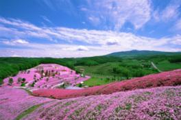 北海道 東藻琴芝桜公園キャンプ場 の写真g9404
