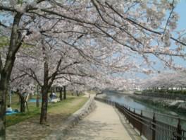 川沿いの遊歩道で散歩やジョギングを楽しめる