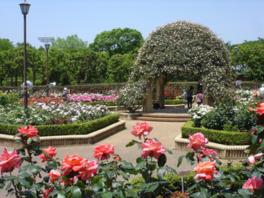 春と秋には71種類のバラが楽しめる