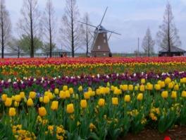 春にはチューリップフェスティバルを開催