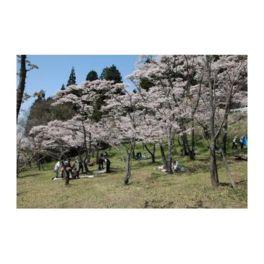高森峠千本桜(高森自然公園)