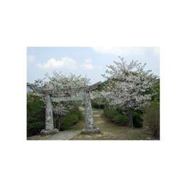大日山公園
