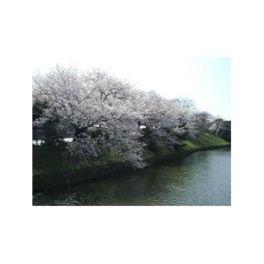 お堀には見事な桜が咲く