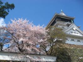 城と桜が並んで映える