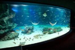 エイなどが泳ぐ巨大水槽のサンシャインラグーン