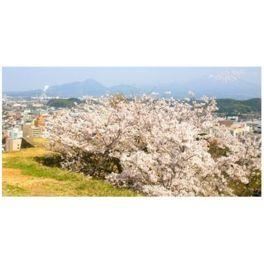 高台から桜と市街地を一望