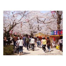 桜の下は大賑わい