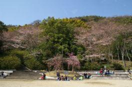 八幡山の山裾の斜面を活用した緑豊かな公園