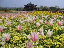 春から秋にかけて約70種類の花が咲き競う