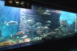 水量200tの大水槽に日本の沿岸魚や回遊魚が泳ぐ