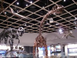 8体の恐竜の全身骨格を展示している中生代展示室