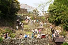 古代インカ遺跡を思わせる階段の下では、クモザルが遊ぶ姿が見られる