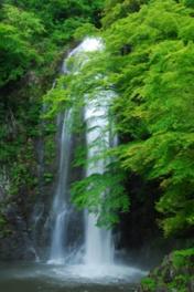 新緑の箕面大滝