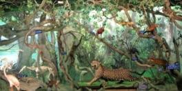 中南米室のパノラマ展示