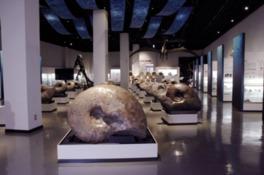 ずらりと並ぶ巨大なアンモナイトの化石