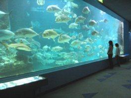 和歌山沖の海中を再現した大水槽