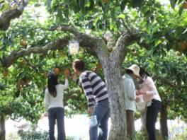 利府町特産の梨が楽しめる