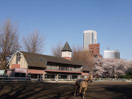 90年以上の歴史を誇る乗馬クラブで乗馬の魅力を味わおう