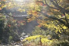 近隣には人気のキャンプ村、TaTuTaの森がある