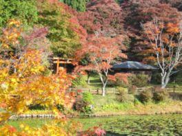 色とりどりの美しい紅葉が水面に映る