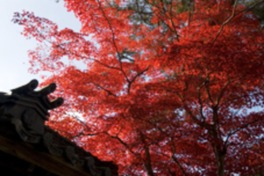 紅葉の隙間から差す柔らかな木漏れ日が人々の心を和ませる