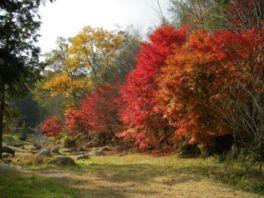 園内の矢野温泉は日帰り入浴も可能