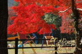 近くの公園には遊具があり家族連れで楽しめる