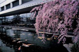 日本庭園も四季折々に変化する作品と言える