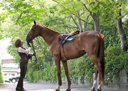 多様なカリキュラムで乗馬の魅力を満喫しよう