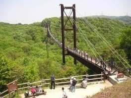 星のブランコは長さ280m、最大高さ50mで、木床板人道吊り橋としては国内最大級