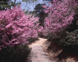 春にはツツジの甘い香りに包まれながら散策