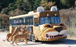動物にエサやりができるバスも運行中