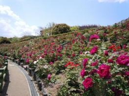 市制50年記念公園(市民の森・フラワーパーク)