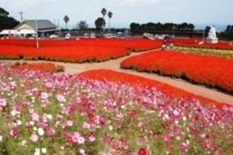 季節に応じて、彩り豊かな満開の花々が見られる