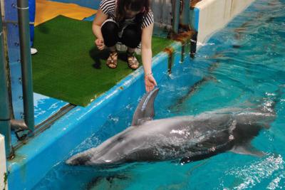 イルカと握手