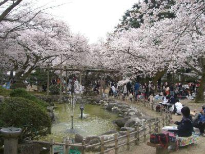 小丸山公園