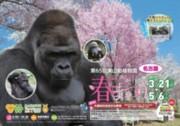 東山動植物園で春を満喫しよう