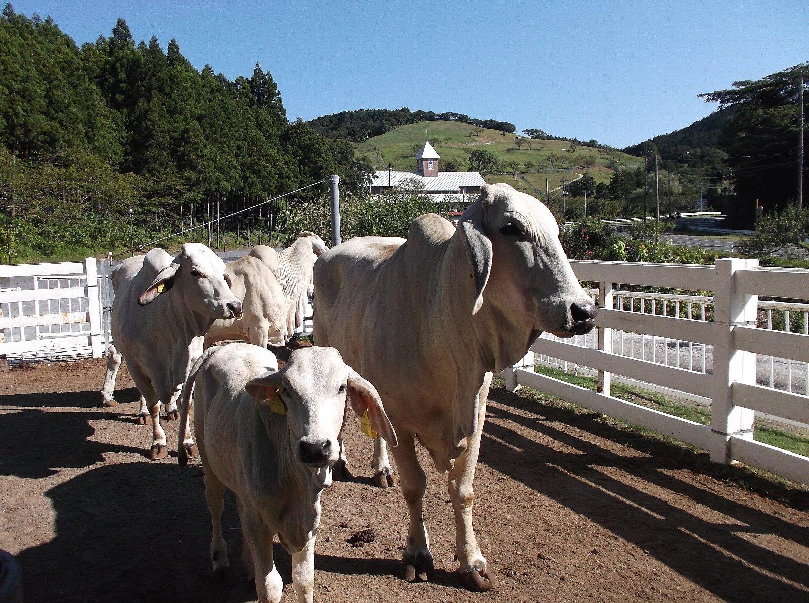 千葉県酪農のさと 千葉県酪農のさとのスポット&イベント情報 | ウォーカープラス