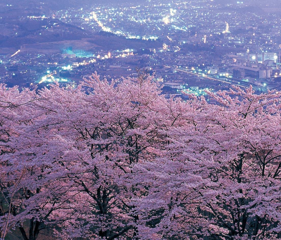 花見シーズンは、ぜひ夜景と一緒に楽しみたい