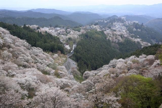 吉野山桜まつり
