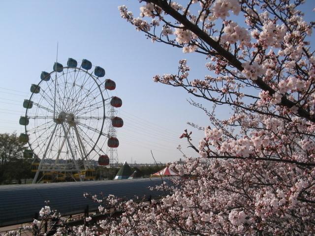 碧南桜まつり