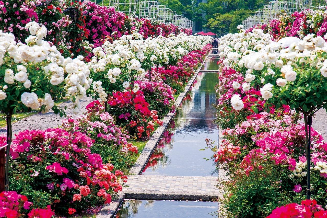 2000品種120万本のバラ祭