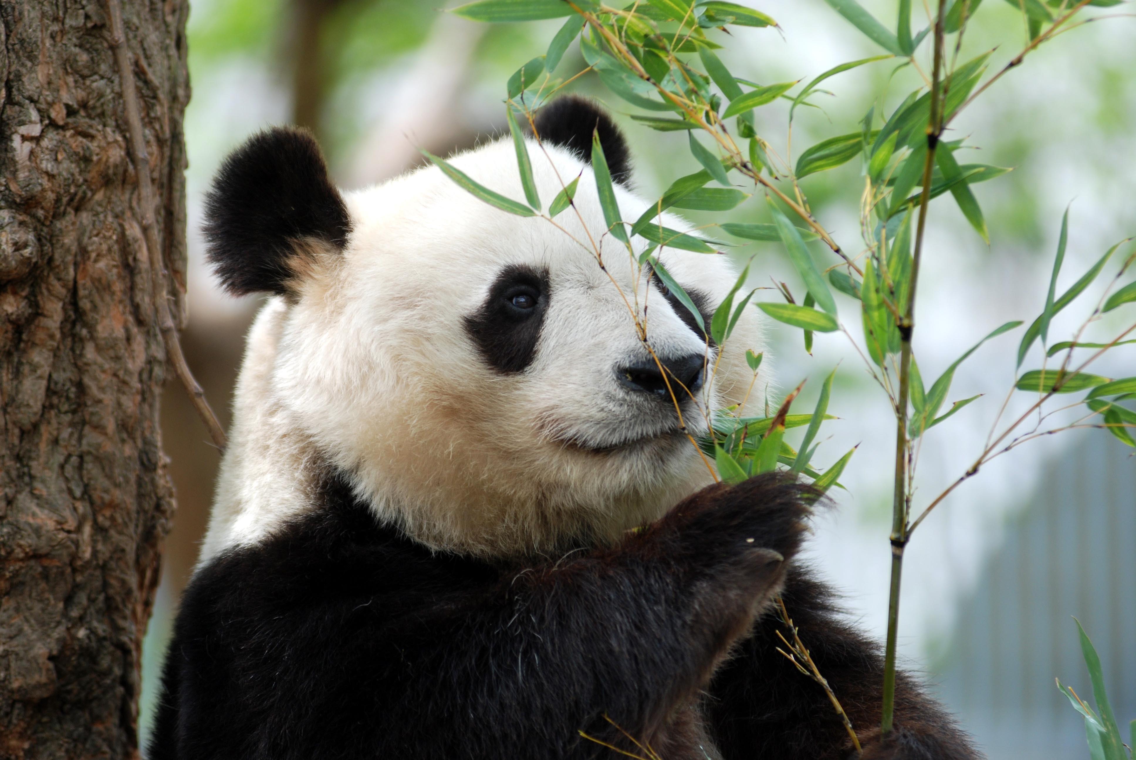 神戸市立王子動物園(兵庫県・動物園)のスポット&イベント情報