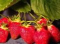 マルタケたかしな果樹園