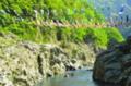 鯉のぼり 秘境大歩危峡を泳ぐ